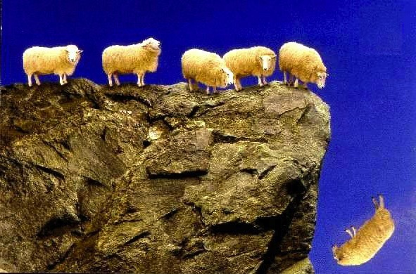 sheep_off_cliff_jpg_scaled1000