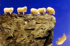 This image has an empty alt attribute; its file name is sheep.jpg