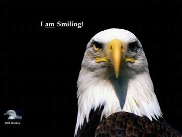 Image result for smiling eagle